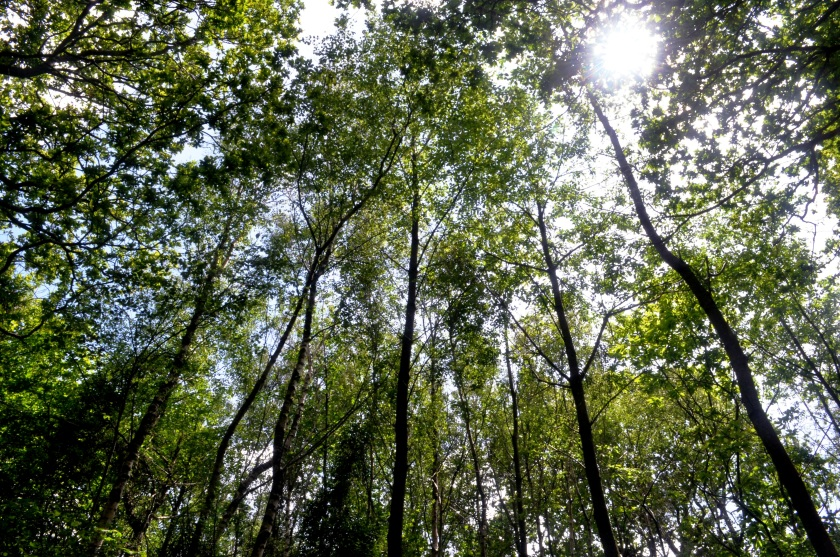 sun shining through in the woods