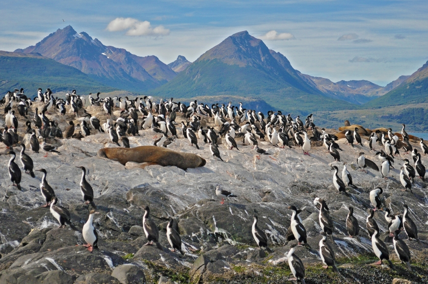 Penguins and sea lions